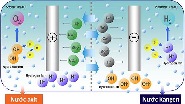 Quá trình điện phân tạo ra nước Kangen